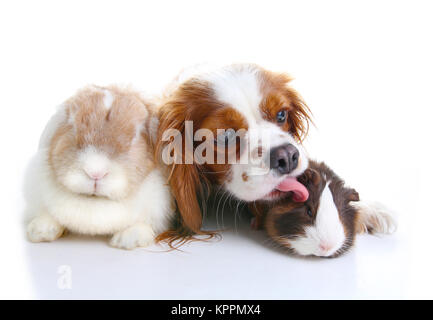 Animal friends. True pet friends. Dog rabbit bunny lop guinea pig animals together on isolated white studio background. - Stock Image