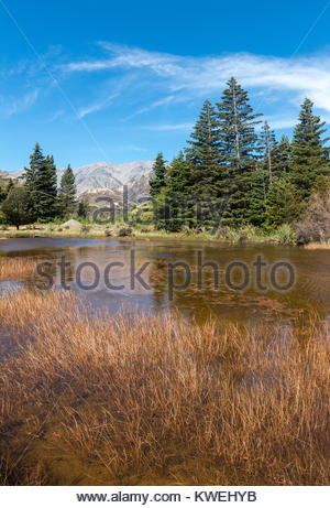 Rural Canterbury scenery, South Island, New Zealand - Stock Image