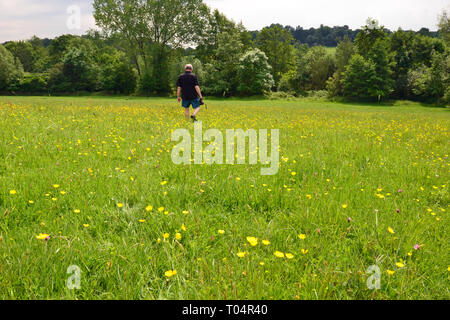 Buttercup meadow at the Weald Country Park, South Weald, Brentwood, Essex, UK - Stock Image