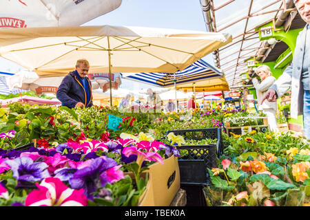 A market in the former Jewish District Kazimierz in Krakow - Stock Image