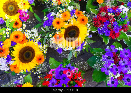 Summer flowers in the square in the old town, Riga, Latvia - Stock Image