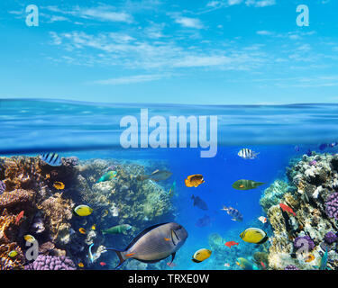 Underwater marine life of the Red Sea and blue sky. Colorful coral reef fishes and reefs. - Stock Image