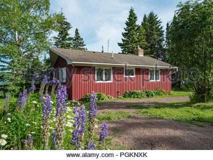 Lupine flowers bloom on walkway to a cabin with sweeping views of Lake Superior in Lutsen,  Minnesota, USA. - Stock Image