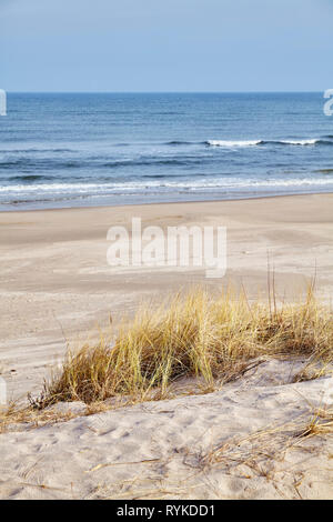 Dried grass on a beach dune, selective focus. - Stock Image