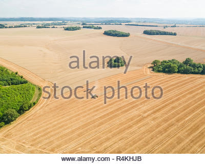 Harvest aerial of combine harvester cutting summer wheat field crop and tractor trailer on farm - Stock Image