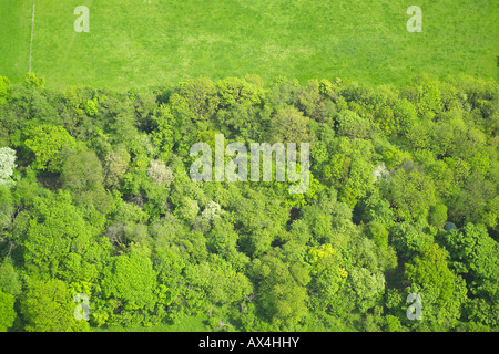 Aerial view of woodlands consisting of Deciduous Trees at the edge of a field - Stock Image