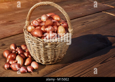 Many small onions in rustic basket on wooden table. Fresh red onions on the wooden table. Free space for you text. - Stock Image