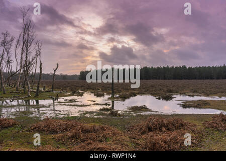 Sunset over a flooded patch of woodland in the New Forest during winter 2019, New Forest National Park, Hampshire, England, UK - Stock Image