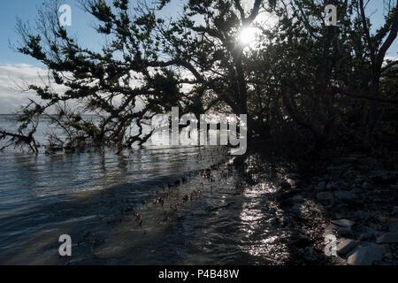 Storm battered mangrove forest along Florida Bay, Everglades National Park, Miami, Florida, USA - Stock Image