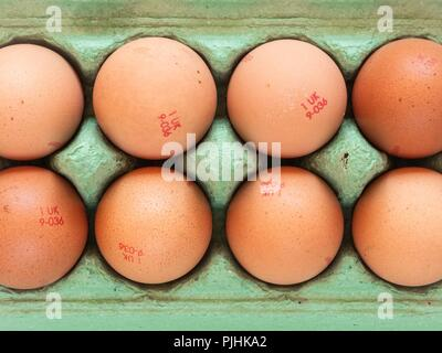 Looking down onto a green egg carton filled with eight hens' eggs - Stock Image