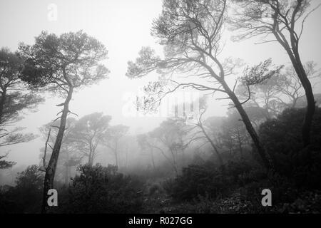 Foret dans la brume, Var, PACA - Stock Image