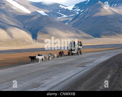 team of dogs pulling a wagon with tourists on a lonely road, Norway, Svalbard, Longyearbyen - Stock Image