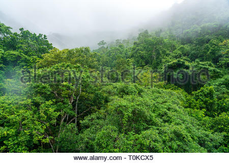 The rainforests of Costa Rica - Stock Image