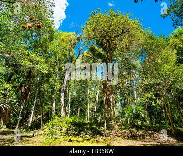 Rainforest at Tikal National Park in Guatemala - Stock Image