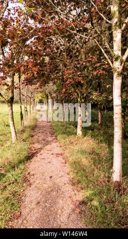 Image of row of trees in autumn colors. - Stock Image