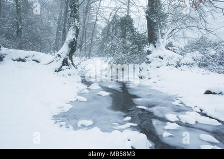 Small frozen leat near okehampton devon uk - Stock Image