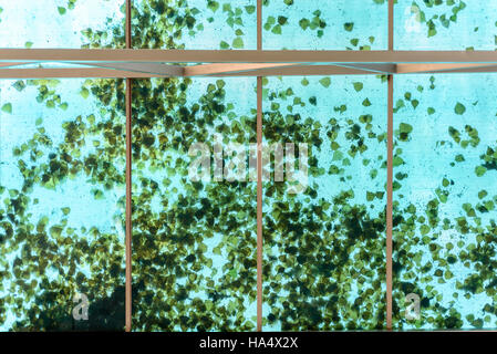 Autumn leaves resting on a glass plastic ceiling in blue and green - Stock Image
