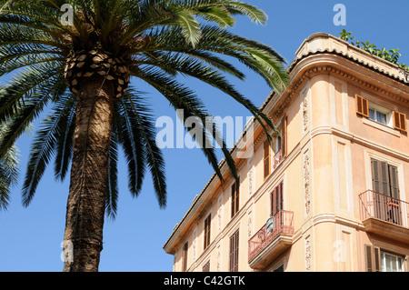 Haus und Palme vor blauem Himmel, Palma, Mallorca, Spanien. - House and palm tree against blue sky, Palma, Majorca, - Stock Image