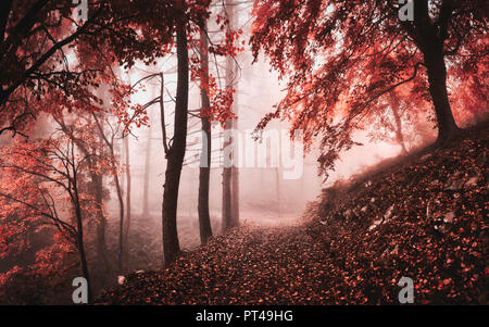 dark and misty atmosphere in the woods with trees and autumn colors - Stock Image