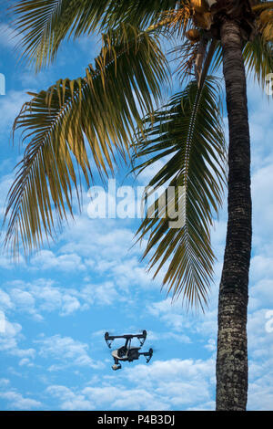 Palm tree blue sky and puffy clouds in Miami Florida. - Stock Image