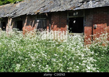 Derelict farm stables - Stock Image