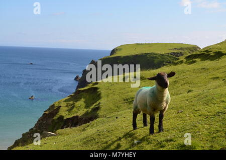 Sheep on a Cliff - Stock Image
