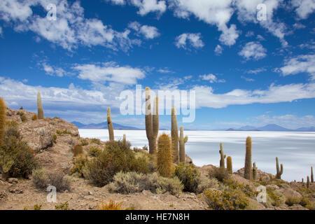 View on Salar de Uyuni from the island Incahuasi - Stock Image