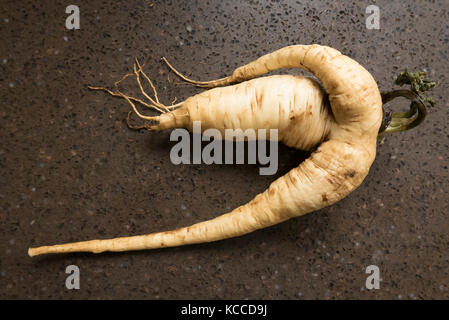 Mis-shapen parnsip harvested and washed ready for use - Stock Image