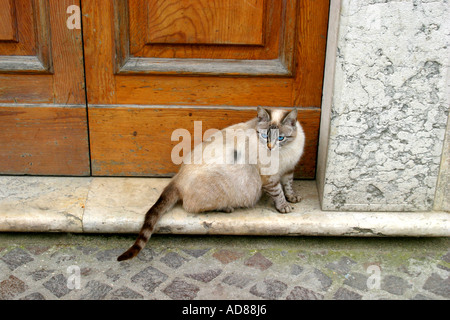 Typically pretty cat with blue eyessits on a doorstep in Visso Le Marche Italy - Stock Image