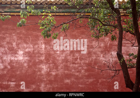 Forbidden City Wall and Tree - Stock Image