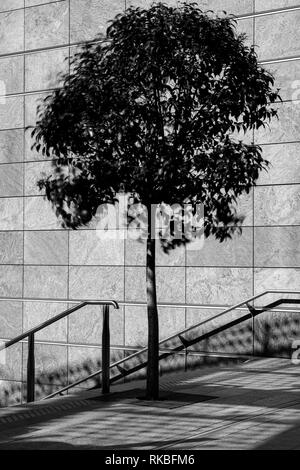 Urban in urban environment - Stock Image