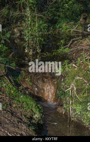 Small stream forming from catchment of several springs in a very wet area - metaphor for generic 'water source', - Stock Image