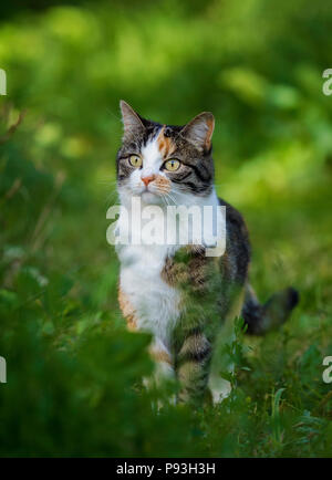 Cute Kitty from Saas-Fee - Stock Image