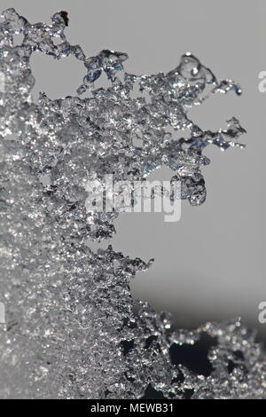 Snowflakes have molten so thin that they form a transparent, icy sheet. Close up. - Stock Image