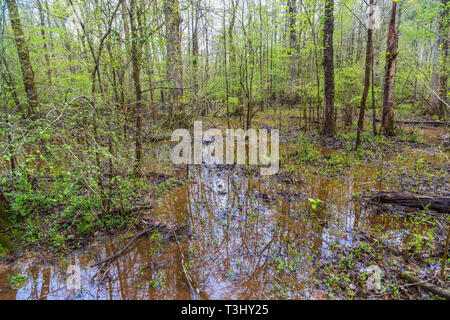 Flooded Lowlands in Forest - Stock Image