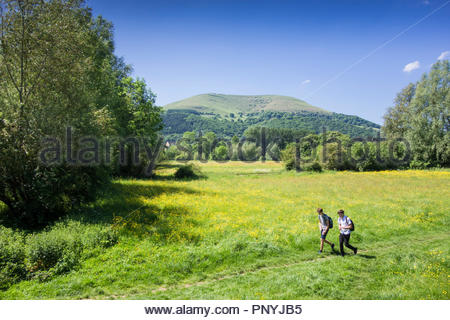 Young men walking through buttercup field; Castle Meadows, Abergavenny, Monmouthshire, Wales, UK, on a  spring day; Blorenge mountain in background. - Stock Image
