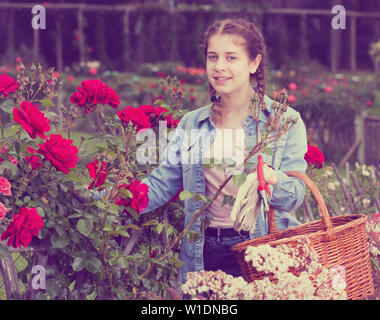 happy russian  teen  holding a basket and standing near the blooming roses - Stock Image