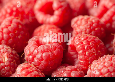 Red and ripe fresh raspberries close view as a background. Full frame image. - Stock Image