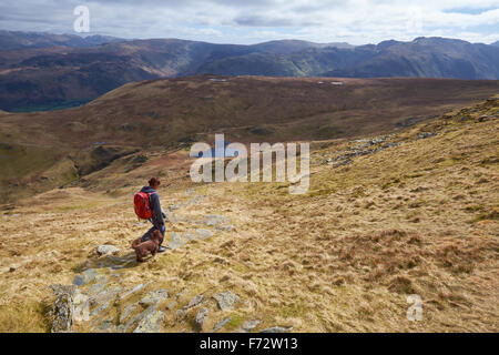 A hiker and their dog walking off the summit of Dale Head with High Spy in the distance, English Lake District, - Stock Image