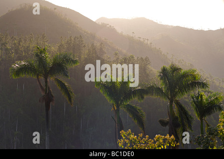 Palm tree filled landscape on the road from Soroa to Las Terazzas, Cuba - Stock Image