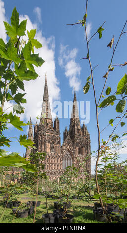 Lichfield Cathedral Staffordshire England with 1918 trees forming a Peace Woodland as part of a Great Exhibition, Imagine Peace, to celebrate the centenary of 1918 created by artist in residence Peter Walker from 17th August 2018 to 27th August 2018.  After the Exhibition the trees will be planted in Beacon Park Lichfield. - Stock Image