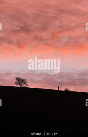 The figure of a person, a tree and a fence silhouetted against the colourful sky at daybreak in the Dorest countryside. - Stock Image