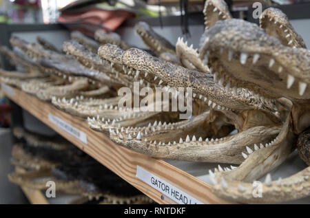 Gator Heads are selling for souvenirs at a North Florida gas station. - Stock Image