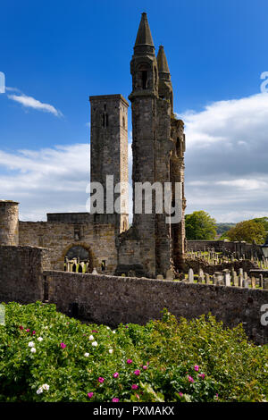 East tower of St Andrews Cathedral with St Rules square tower and cemetery tombstones and rose bush St Andrews Fife Scotland UK - Stock Image