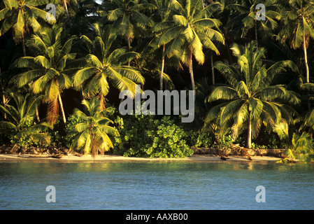 tropical island lushness in the Marshall Islands - Stock Image