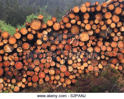 Pile of logs - Stock Image