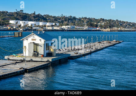 USA, California, San Diego, seals in the harbor of Point Loma - Stock Image