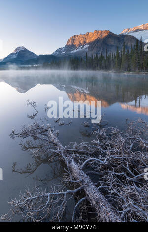 Frost covered fallen tree in Banff National Park at sunrise, Canadian Rockies, Alberta, Canada. Autumn (October) 2017 - Stock Image