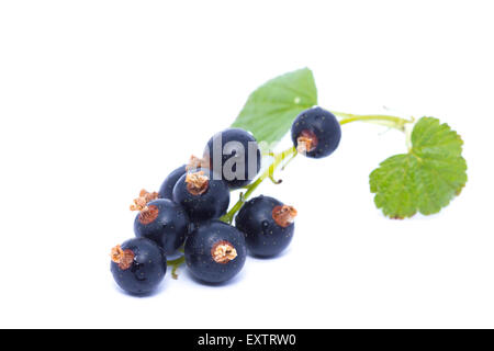 Black currant with green leaf isolated on white background - Stock Image