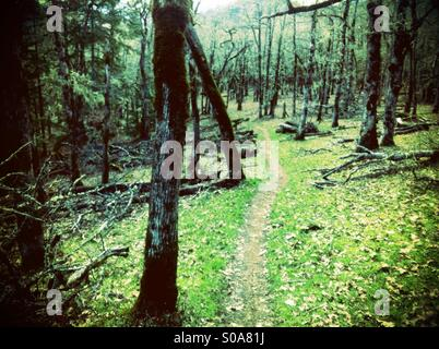 Trail - Stock Image
